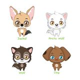 Set of canine family species. Set of canine family animal species stock illustration
