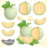 Set of cantaloupe melon fruit in various styles vector format. Set of cantaloupe melon fruit with leaf in various styles vector format Stock Images