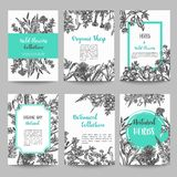 Set of card with hand drawn herbs and wild flowers Vintage collection of plants Floral wedding invitation Vector. Illustrations in sketch style royalty free illustration