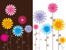 Set of cards with colorful blossoms Royalty Free Stock Image