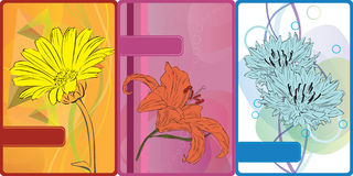 Set of cards with flowers Royalty Free Stock Photography
