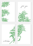 Set of 4 cards with leaf of mimosa, Vector illustration  on white background, Designed frame with space for text Stock Images