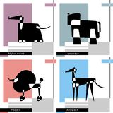 Set of cards with the stylized dog breeds of Afghan Hound, Azawakh, Poodle and Komondor on the Colorful background. Vector Illustr vector illustration