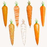 Set of carrots differently drawn Stock Photography