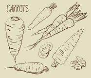Set carrots isolated on white background. Set simple sketch icons carrots isolated on white background. Vegetables. Food. Hand drawn Royalty Free Stock Photography