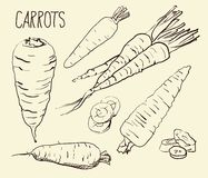 Set carrots isolated on white background. Vegetables. Food. Hand drawn. Silhouette, color, line art -. Set simple sketch icons carrots isolated on white Stock Photo