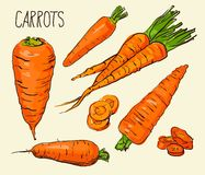 Set carrots isolated on white background. Vegetables. Food. Hand drawn. Silhouette, color, line art -  Royalty Free Stock Image