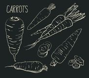 Set carrots isolated on white background. Vegetables. Food. Hand drawn. Silhouette, color, line art -. Set simple sketch icons carrots isolated on white Royalty Free Stock Photo