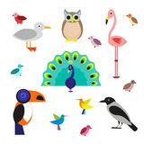 Set of cartoon birds in a flat style  on white background. Vector illustration, EPS10. Royalty Free Stock Photo