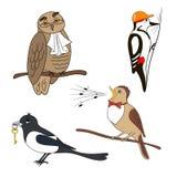 Set of cartoon birds. Owl, woodpecker magpie nightingale Stock Photos