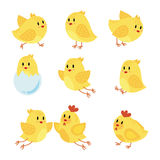 A set of cartoon chicken. Collection of happy yellow chicks. Little birds. Vector illustration. Children of chicken and stock illustration