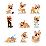 Set of cartoon corgi. Funny little dog in different actions. Walking, wondering, sleeping, growling, playing, crying Stock Photos