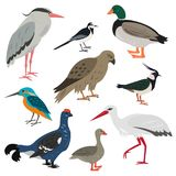 Set of cartoon cute birds on white background. Vector illustration Royalty Free Stock Images