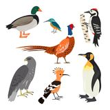 Set of cartoon cute birds on white background. Vector illustration Royalty Free Stock Photo