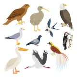Set of cartoon cute birds on white background. Vector illustration Stock Image