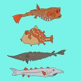 Set of cartoon fish. Vector illustration Royalty Free Stock Photography
