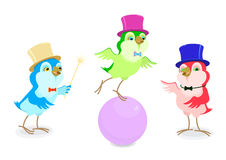 Set of cartoon funny birds in the cylinders acting in the circus. Stock Image