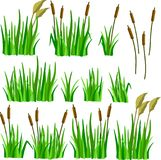 A set of cartoon grass, reeds and canes. Isolated on white background Stock Illustration