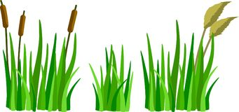 A set of cartoon grass, reeds and canes. Isolated on white background Royalty Free Illustration