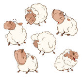 Set of  Cartoon Illustration.A Different Sheep for  you Design. Cartoon Character. Set of various lovely fluffy sheep Royalty Free Stock Photography