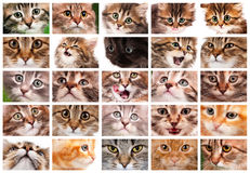 Set of cat Royalty Free Stock Photos