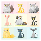 Set of cat family. Vector , illustration Royalty Free Stock Images