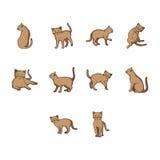 Set of cat Stock Image