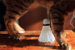 Set Cat playing Badminton shuttlecock. Racket on worm wood background. Morning sun, shadows. Close up. Set badminton feathery shuttlecock, racket and cat Royalty Free Stock Photos