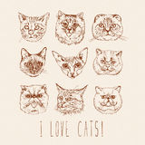 Set of cats. Breeds. Siamese, British, Siberian, Persian, Scottish Fold, Maine Coon, Bengal, Sphynx in doodle hipster vintage styl Royalty Free Stock Image