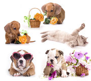 Set of cats and dogs Royalty Free Stock Image