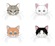 Set of cats heads. Face kitten, whiskers and ears, muzzle and wool. Stock Photos