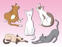 Set of cats Stock Photo
