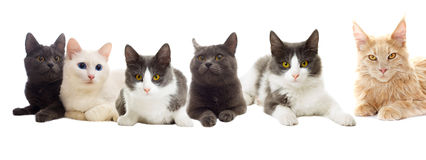 Set of cats Stock Images