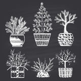 Set of chalk drawn different Christmas trees in different types of pots. Merry Christmas and Happy New 2017 Year. Royalty Free Stock Photo