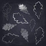 Chalkboard background with chalk drawn oak leaf. Set of chalk drawn oak leaves on chalkboard background. Sketch of autumn leaf stock illustration