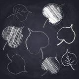 Poplar leaf. Chalk drawn autumn leaves on chalkboard background. Set of chalk drawn poplar leaves on chalkboard background. Sketch of autumn leaf royalty free illustration