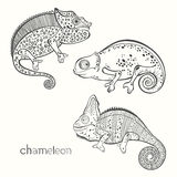Set of chameleon isolated on white background. Hand drawn  Royalty Free Stock Photos