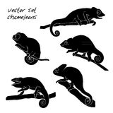 Set of chameleon. Reptiles vector illustration Royalty Free Stock Photos