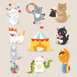 Set of cheerful circus playing cats vector illustration. Stock Photo