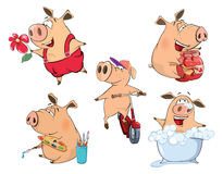 Set of cheerful pigs Cartoon. Set of various cheerful pigs Stock Photos