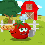 Set of chef tomato with pizza and tablet on a farm Royalty Free Stock Photos