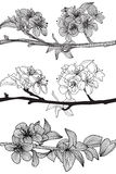 Set of cherry blossoms. Set of hand drawn decorative cherry blossoms, design elements vector illustration
