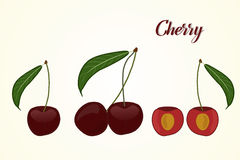 Set cherry, vector. Illustration of fruits, leaves and cherry fruit section where you can see the kernel in the vector Stock Photography