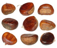Set chestnut isolated on white background Stock Photo