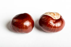 Set of chestnuts on white Stock Photo