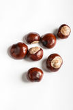 Set of chestnuts on white. Set of delicious chestnuts on white bacground Royalty Free Stock Photos