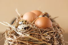 Set chicken and quail eggs Stock Images