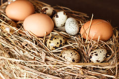 Set chicken and quail eggs Royalty Free Stock Images