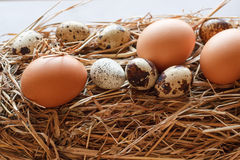 Set chicken and quail eggs Stock Photo