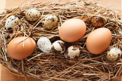 Set chicken and quail eggs Royalty Free Stock Photo